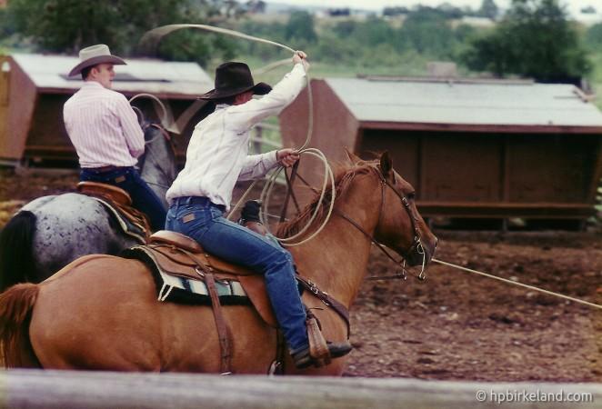 Wranglere, 1994