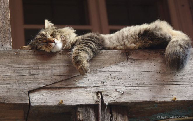 Noen gir katten i alle turistene og tar seg en siesta i høyden. 1/125 s, f/5.6, ISO 1000
