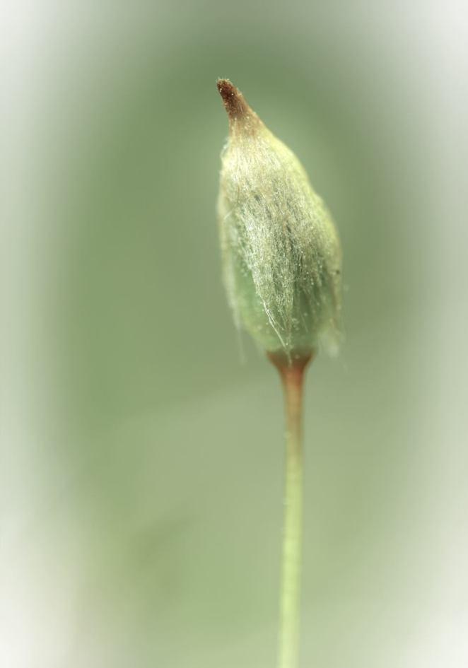 Spore capsule