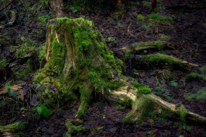 Borgenskogen_0019_2048