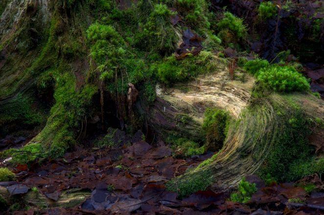 Borgenskogen_0029_2048
